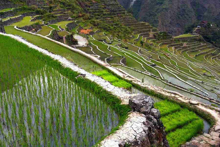 set in the majestic rice terraces At a glance: banaue rice terraces on november 10, 2013 get link amidst these majestic terraces is a plethora of beautiful and natural destinations where one can.