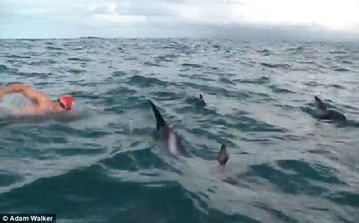 Swimmer Got Scared When He Saw A Shark Approaching Him