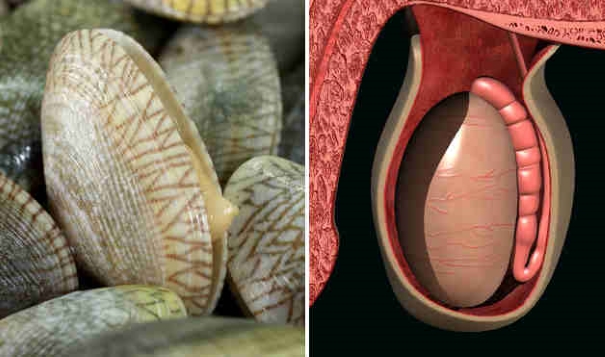 foods resembling body parts (1)