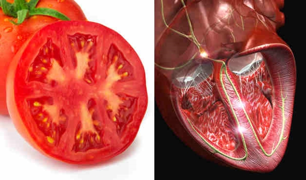 foods resembling body parts (3)