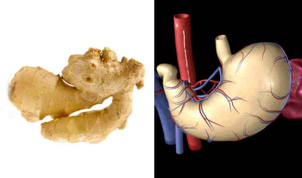 foods resembling body parts (5)