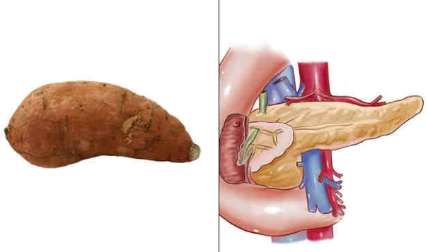 foods resembling body parts (6)