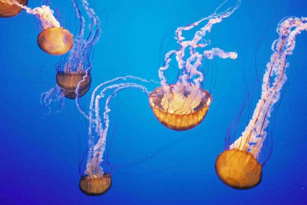 oldest-animals-jellyfish