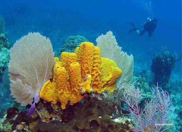 oldest-animals-sponges