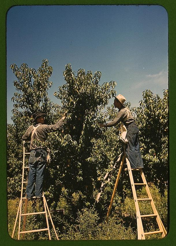 rare color photos - 1940s (28)