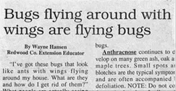 funny news headlines 11