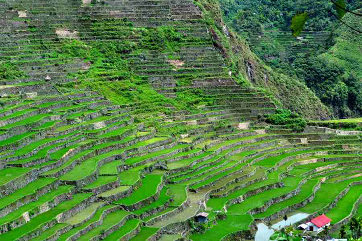 ph rice terraces 3