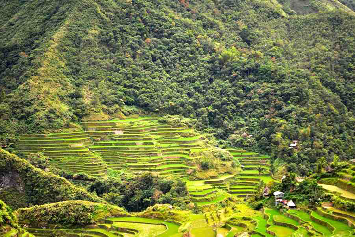 ph rice terraces 35