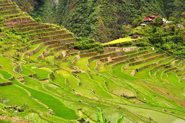 ph rice terraces 37
