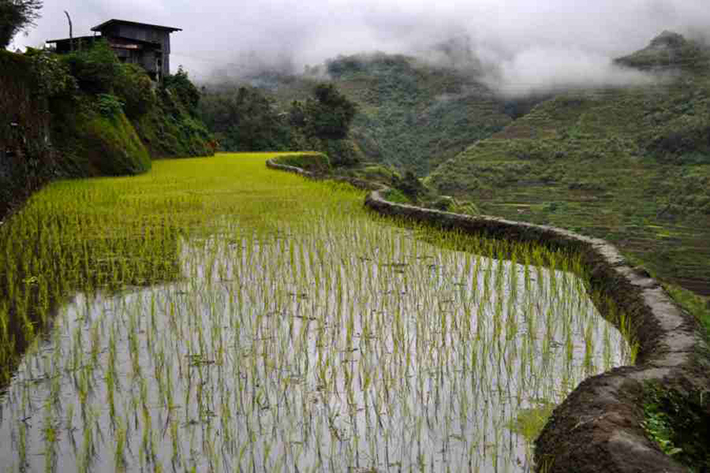 ph rice terraces 41