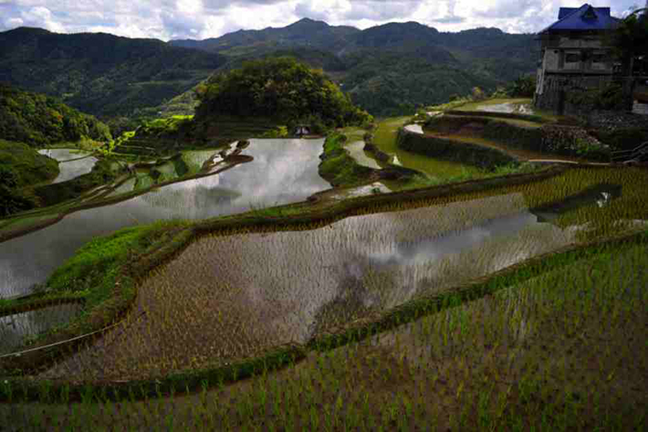 ph rice terraces 43