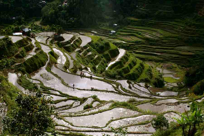 ph rice terraces 50