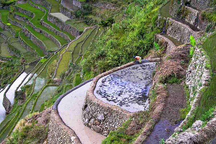 ph rice terraces 6