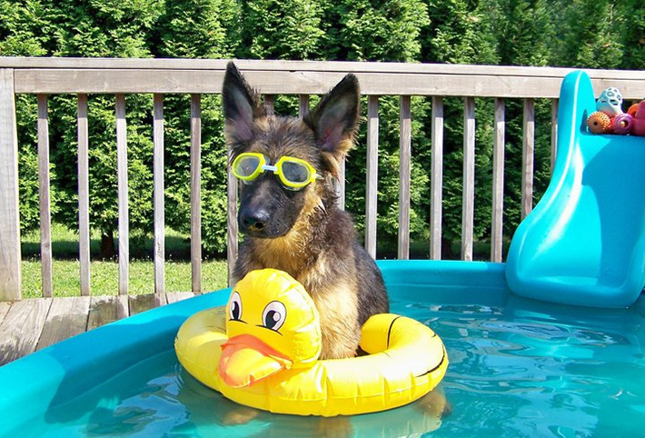 7 Ways To Make Your Dog 39 S Dream Backyard A Reality This Summer Dogvacay Official Blog