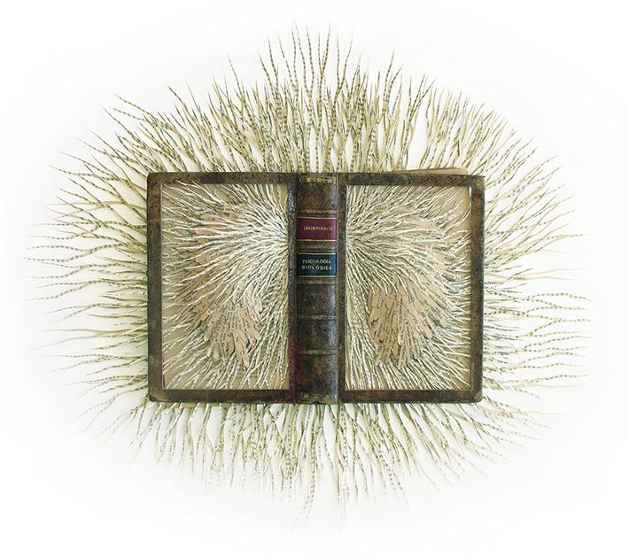 Wildenboer book art 01