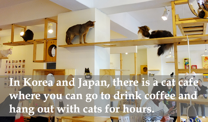 coffee facts 5