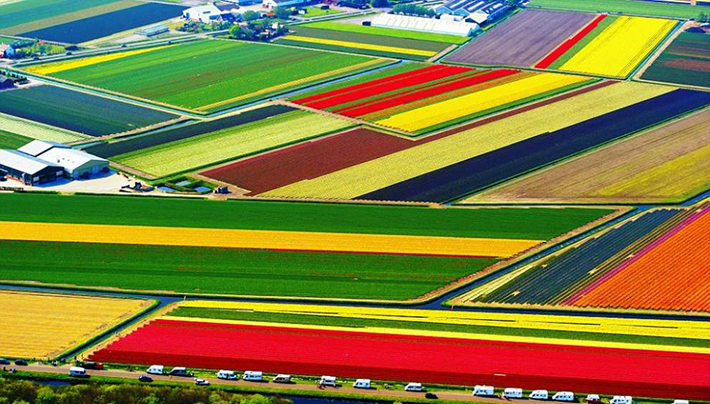 aerial photos - tulip fields