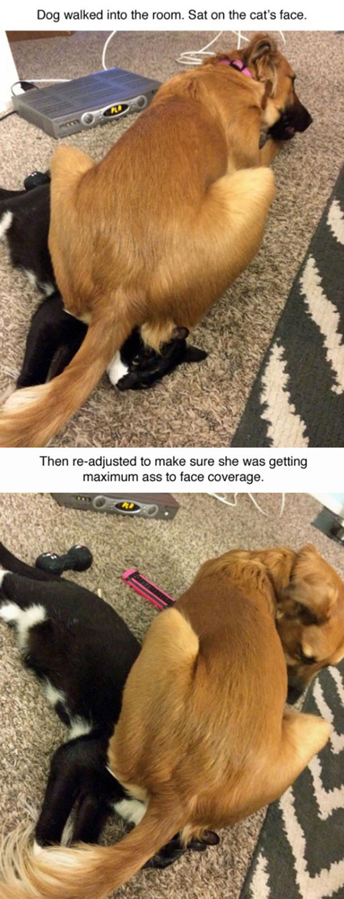animals being jerks 9