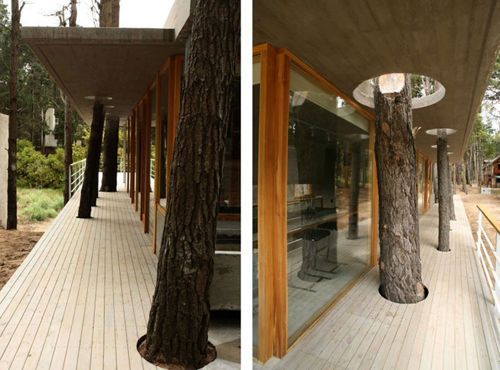 17 Gorgeous Houses With Living Trees Incorporated Into Their