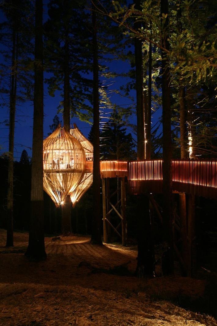 tree house 5a