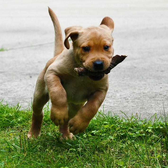 dog hacks 10