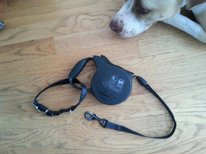 dog hacks 7