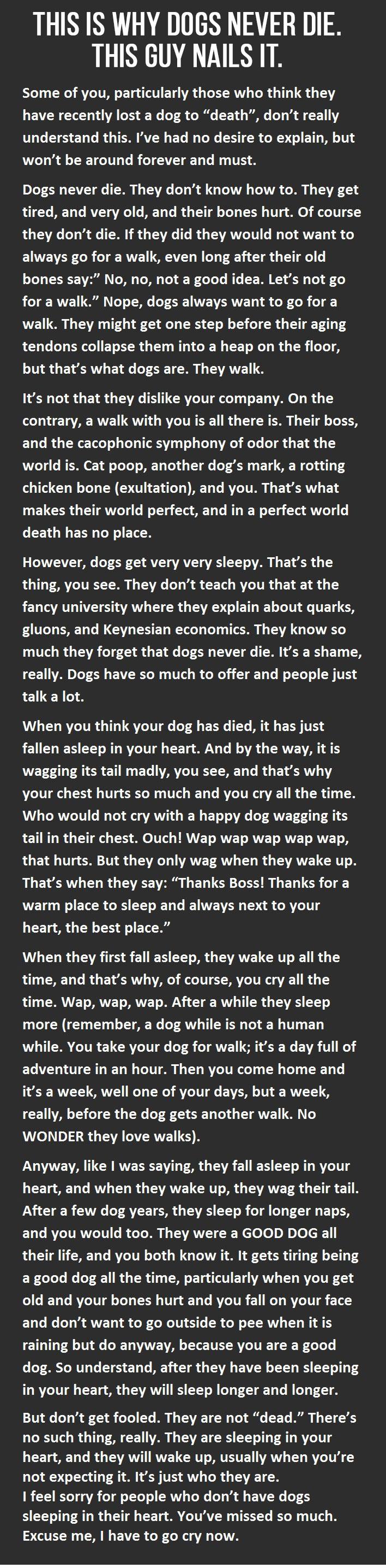 dogsd