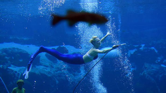 mermaid shows 1