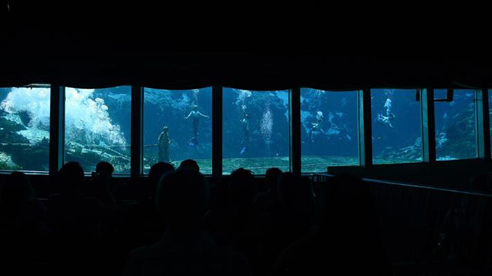 mermaid shows 3