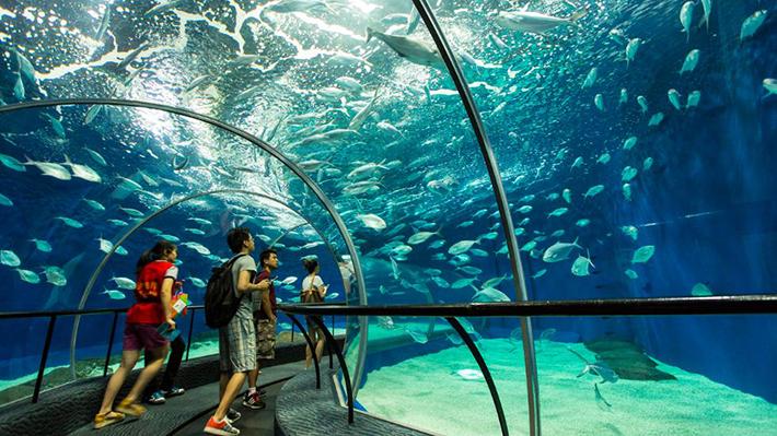 shanghai ocean aquarium 1