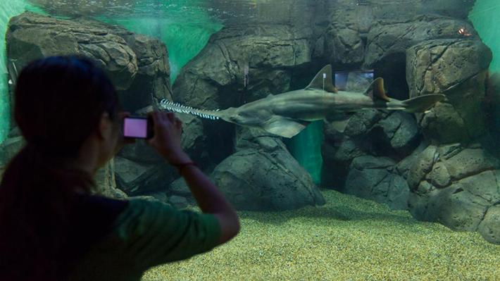 shanghai ocean aquarium 2