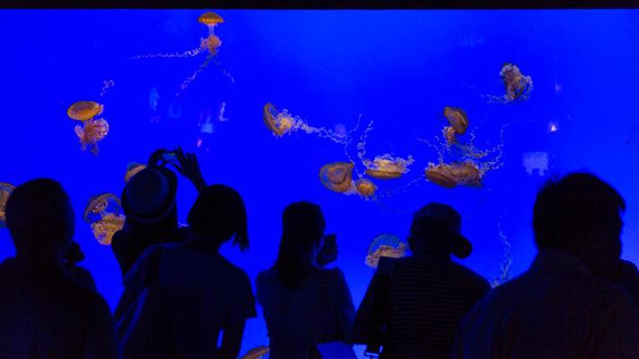 shanghai ocean aquarium 3