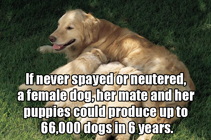 14 Incredible Dog Facts Worth Knowing. #4 Is Quite A Treat ...