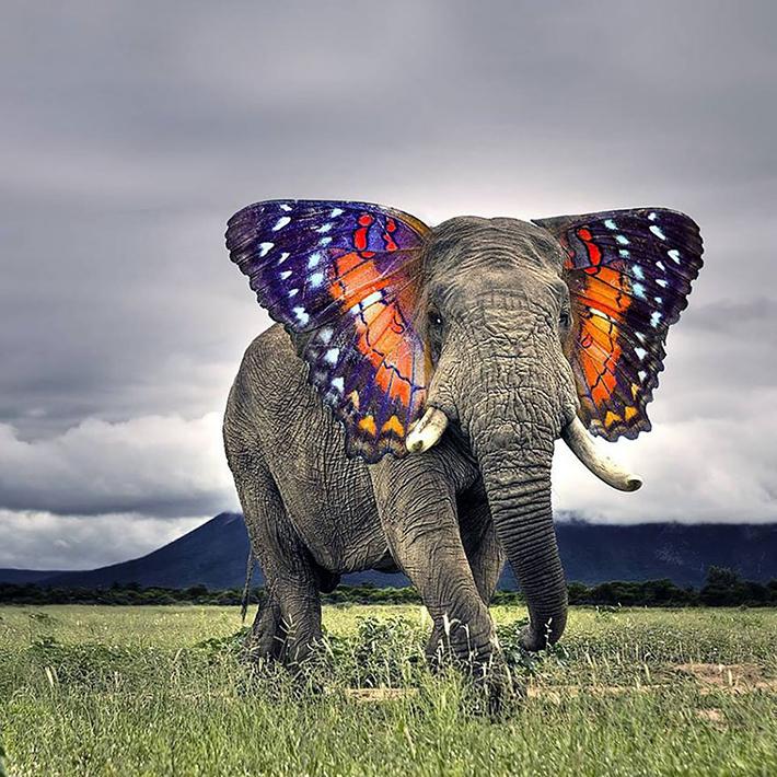 hybrid animals 1