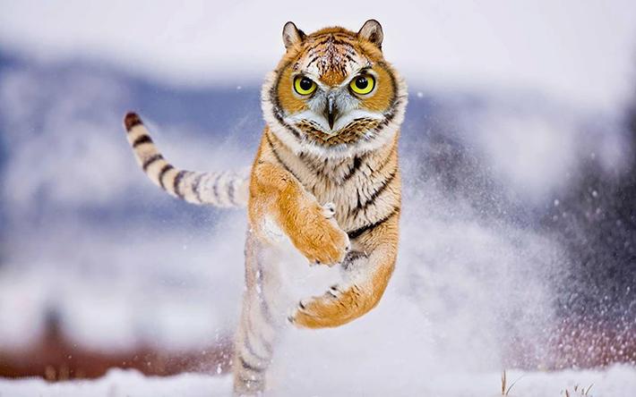 hybrid animals 14