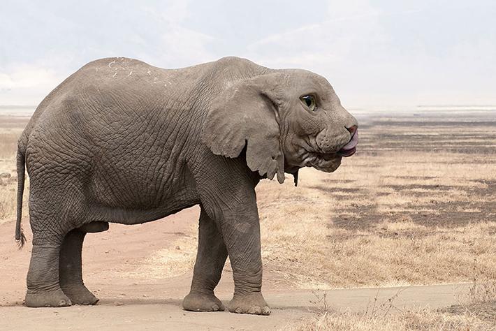 hybrid animals 19