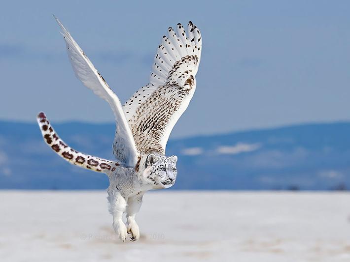 hybrid animals 9