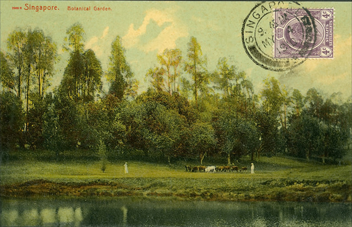 vintage postcards - singapore 11